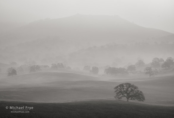Fogscape, Sierra Nevada foothills, Mariposa Country, CA, USA