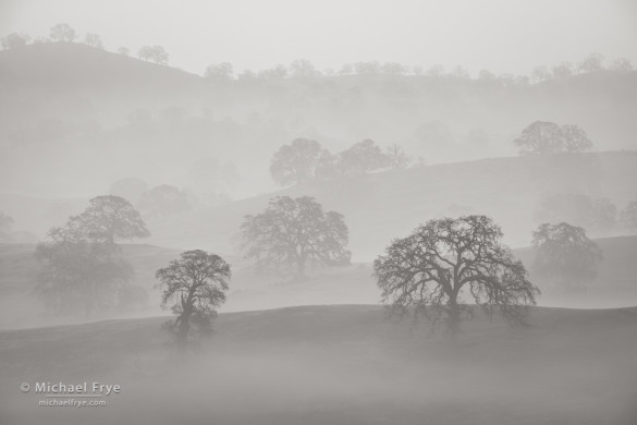 Blue oaks and misty ridges, Sierra Nevada foothills, Mariposa Country, CA, USA
