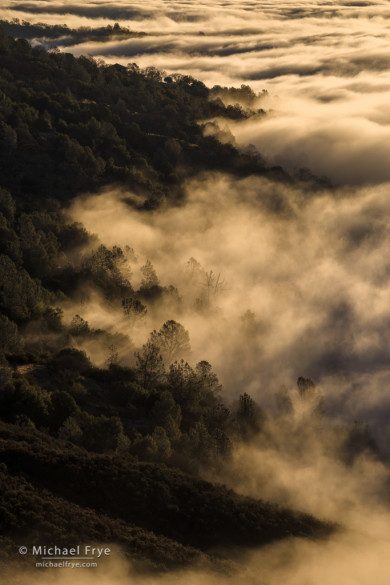 Fog along the slopes of Mt. Bullion, Mariposa County, CA, USA