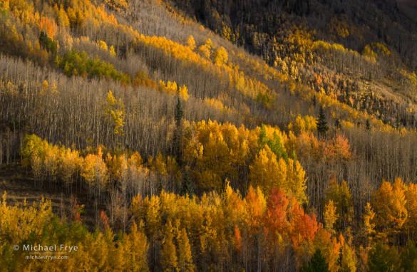 Aspens near Red Mountain Pass, Colorado, USA
