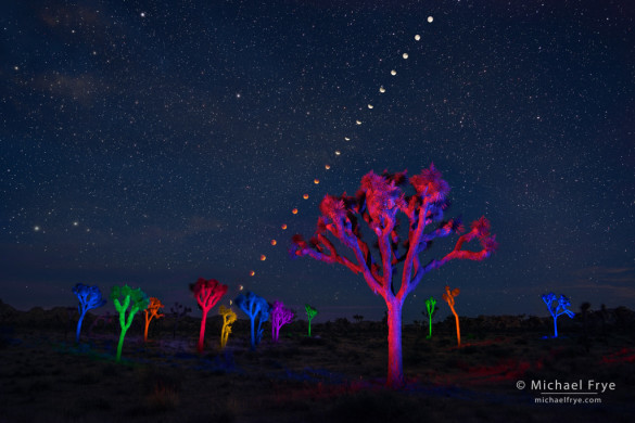 Lunar eclipse sequence with light-painted Joshua trees, September 27th, 2015, Joshua Tree NP, CA, USA