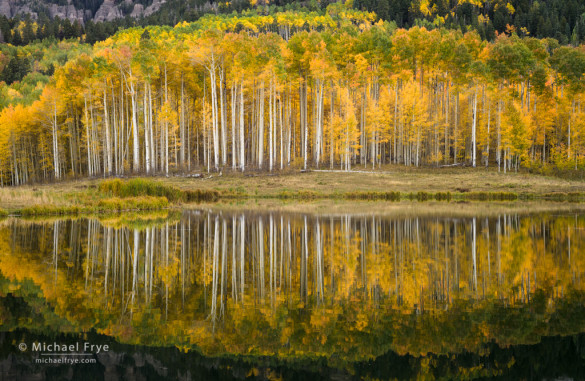 Aspens and reflections, Uncompahgre NF, CO, USA