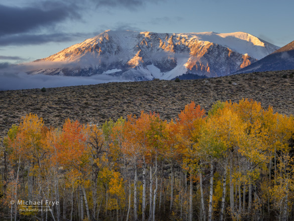 Aspens and peak at sunrise, Inyo NF, CA, USA