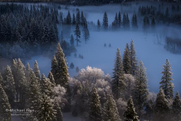 Meadow, trees, and fog, Yosemite NP, CA, USA