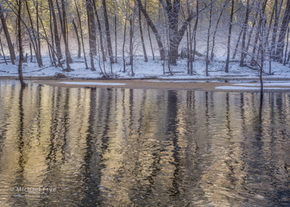 Cottonwood trees reflected in the Merced River, Yosemite NP, CA, USA