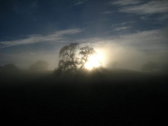 Fog, by Joe Navratil