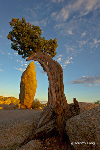 """Juniper and Monolith"" by Jeremy Long"