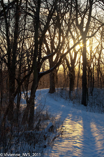 """Late Afternoon, Moraine Hills State Park"" by Vivienne Shen"