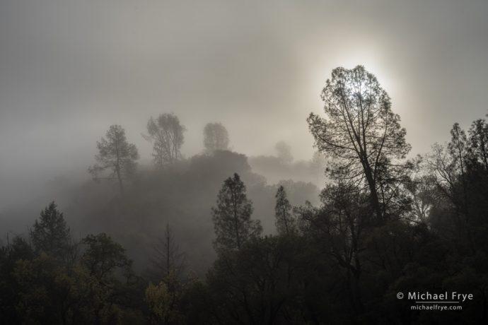 Fog, sun, and gray pines, Sierra Nevada foothills near El Portal, CA, USA
