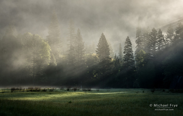 Sunbeams and fog in a Yosemite Valley meadow, Yosemite NP, CA, USA