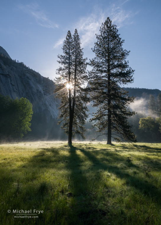Early morning in the Ahwahnee Meadow with Half Dome and ponderosa pines, Yosemite NP, CA, USA