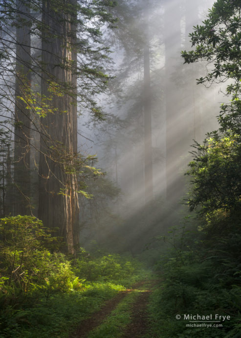 Avoiding Bright Edges and bright spotsSunbeams and an old road in a redwood forest, northern California coast, USA