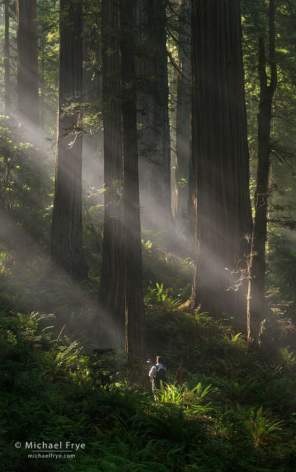 Photographer in the redwoods, northern California, USA
