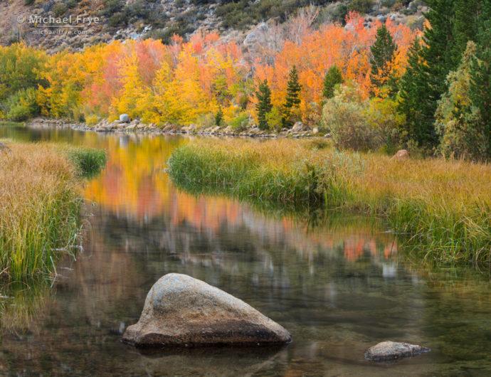 Aspens, reeds, and reflections, Bishop Creek Canyon, Inyo NF, CA, USA
