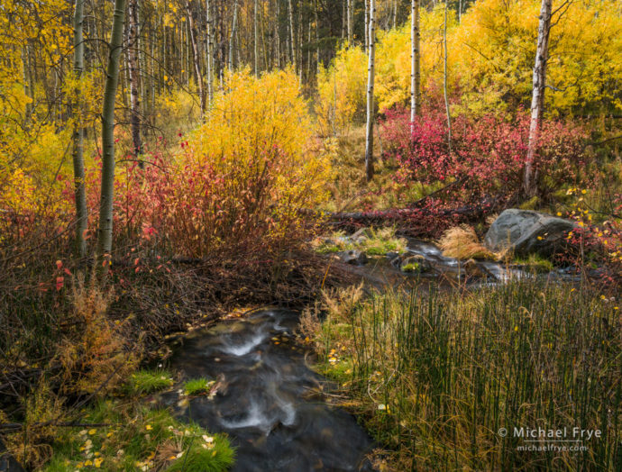 Aspens, dogwoods, and willows along a creek in autumn, Inyo NF, CA, USA