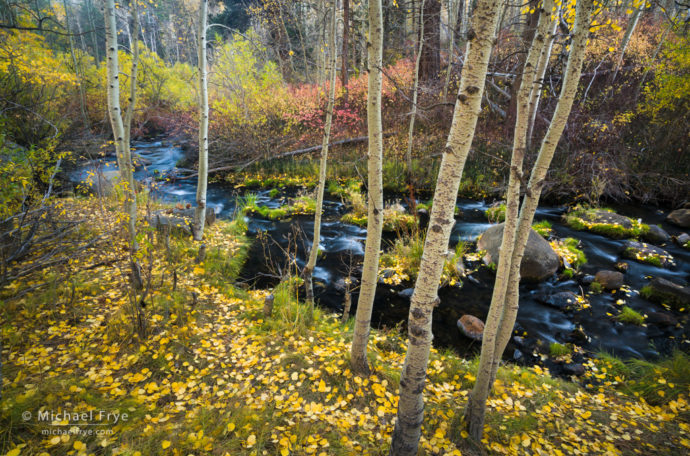 Autumn scene along an eastern Sierra creek, Inyo NF, CA, USA