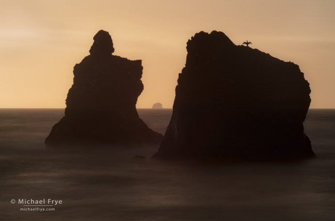 22. Sea stacks and cormorant, Redwood NP, CA, USA
