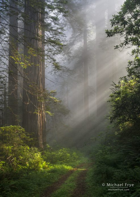 23. Sunbeams and an old road in a redwood forest, northern California coast, USA