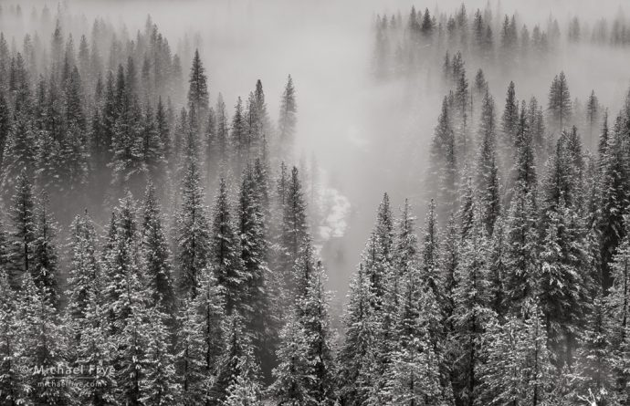 Trees, mist, and the Merced River, Yosemite NP, CA, USA