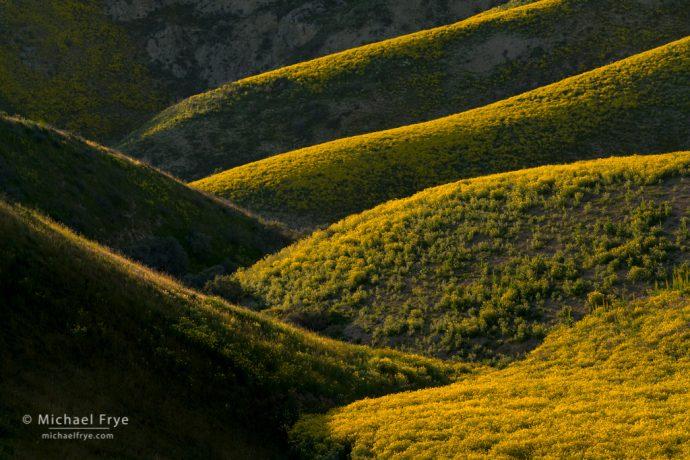 Flower-coverd folds in the Temblor Range, Carrizo Plain NM, CA, USA