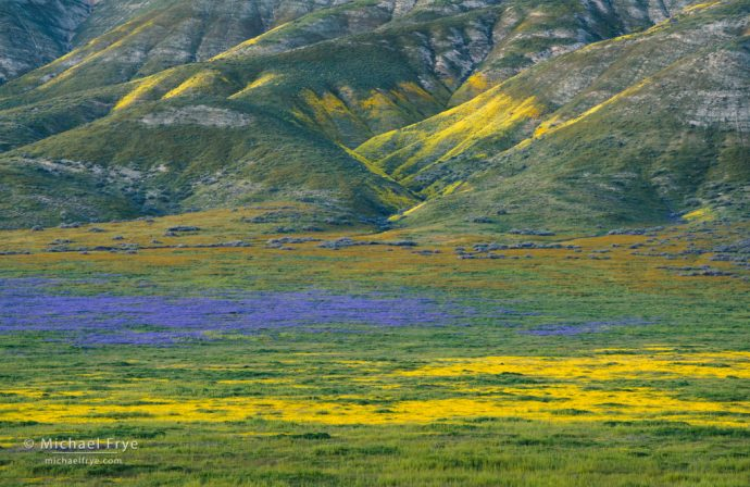 Wildflowers and hills of the Temblor Range, Carrizo Plain NM, CA, USA