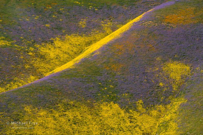 Flower-covered hills, Carrizo Plain NM, CA, USA