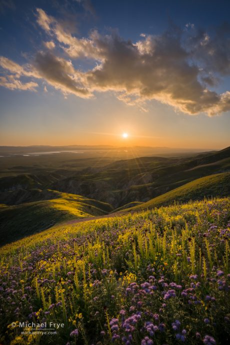 Avoiding Bright Edges and bright spots: Setting sun from the Temblor Range, with desert candles, tansy phacelia, and hillside daisies in the foreground, Carrizo Plain NM, CA, USA