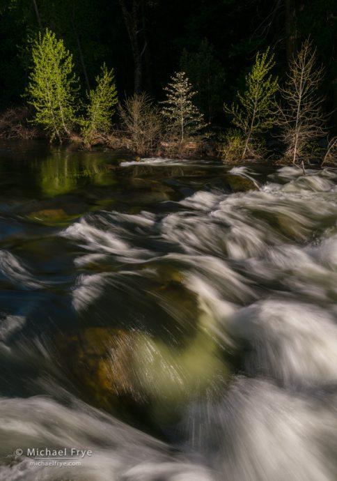Dogwood, cottonwoods, and rapids along the Merced River, Yosemite NP, CA, USA