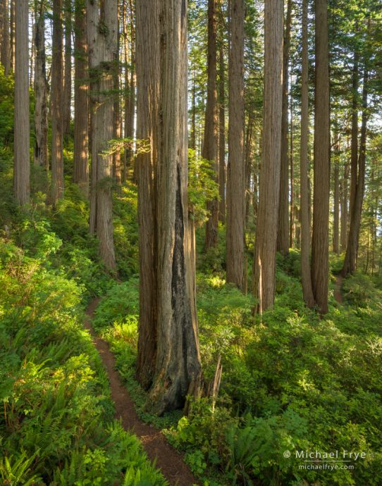 Trail through the redwoods, Del Norte Coast Redwoods SP, USA