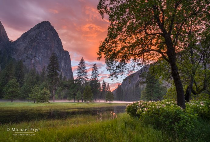 Sunset in El Capitan Meadow with oaks, pines, azaleas, and Lower Cathedral Rock, Yosemite NP, CA, USA