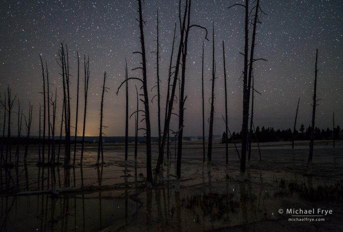 Trees and stars, Lower Geyser Basin, Yellowstone NP, WY, USA