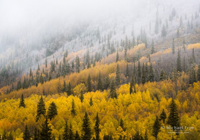 Colorado Autumn Color hillside with aspen and spruce trees, Pike-San Isabel NF, CO, USA