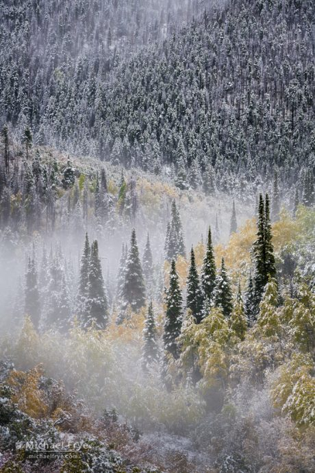Spruce, firs, and aspens after an autumn snowstorm, Rabbit Ears Pass, Medicine Bow-Routt NF, CO, USA
