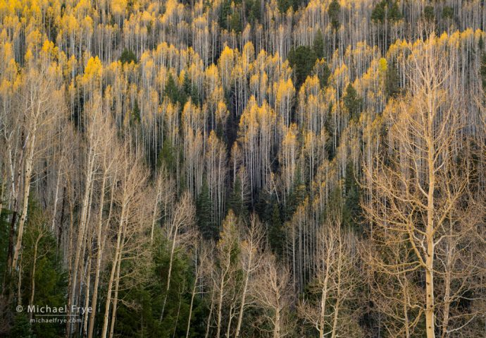 Aspens and conifers, San Juan NF, CO, USA