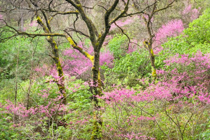 Color is not Enough for Cohesive Design:Repeating Patterns: Redbud and oaks, Merced River Canyon, CA, USA