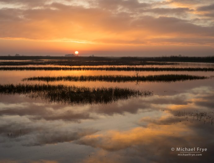 Color is not Enough for Cohesive Design: Repeating Patterns, Sunrise in a San Joaquin Valley marsh, CA, USA
