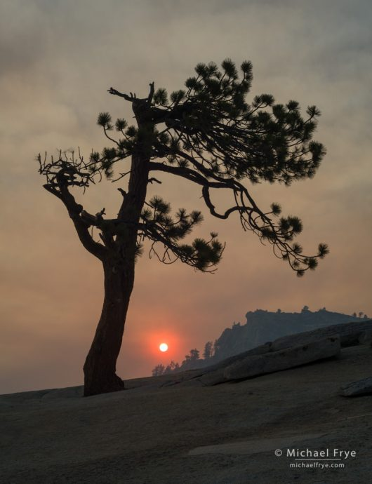 Smoky sunset at Olmsted Point with Jeffrey pine, Yosemite NP, CA, USA