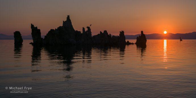 Osprey bringing a fish back to its nest at sunrise, Mono Lake, CA, USA