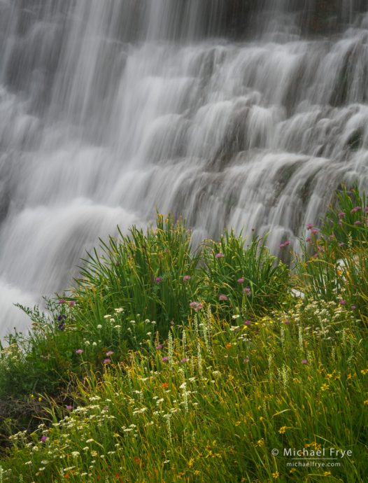 Wildflowers and waterfall, Inyo NF, CA, USA