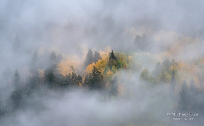 Autumn hillside in the fog, Uncompahgre NF, CO, USA