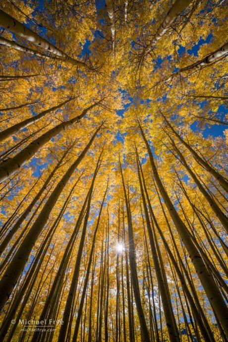 Autumn glow, Uncompahgre NF, CO, USA