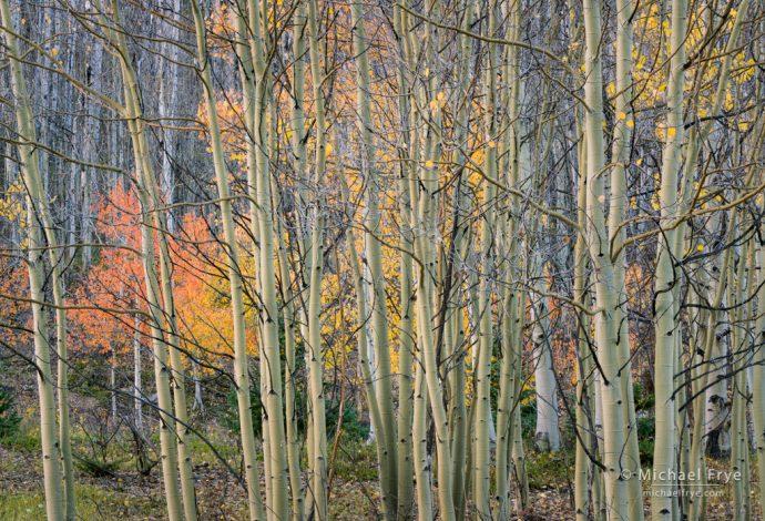 Late autumn hues, Uncompahgre NF, CO, USA