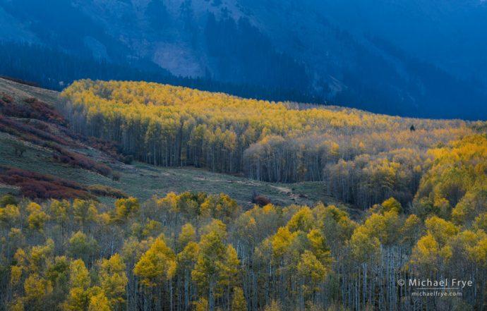 Aspen hillside, Uncompahgre NF, CO, USA