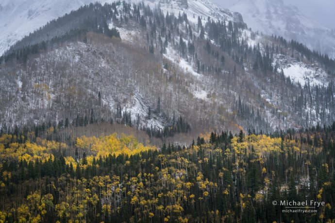Aspens and conifers on a snowy hillside, Uncompahgre NF, CO, USA