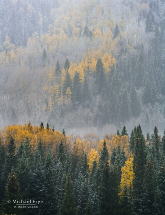 Aspens, conifers, and a dusting of snow, Uncompahgre NF, CO, USA
