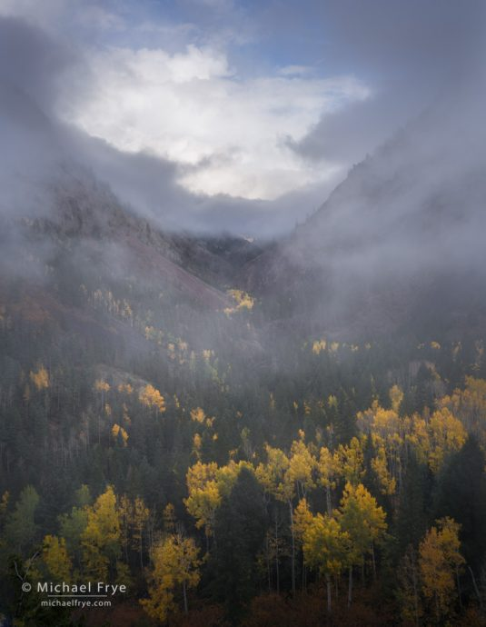 Fog and aspens, Uncompahgre Gorge, Uncompahgre NF, CO, USA