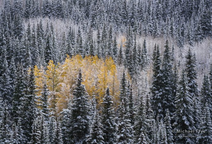 Aspens and conifers in snow, Uncompahgre NF, CO, USA