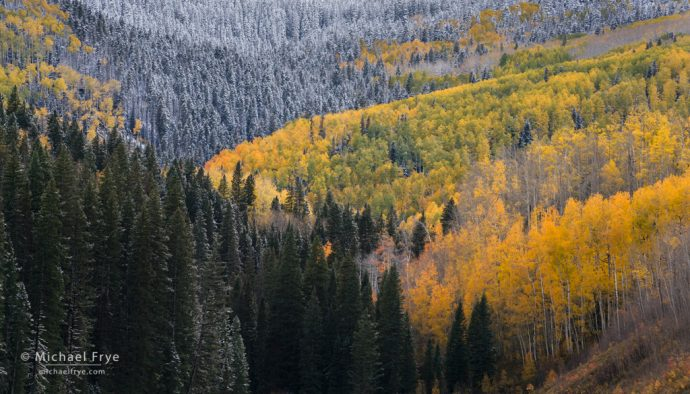Winter is coming to hillside with aspens and conifers, Uncompahgre NF, CO, USA