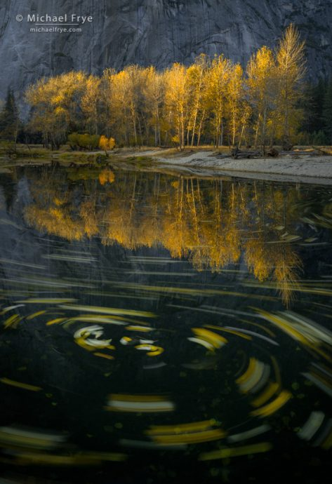 Coping Strategies, not just pretty pictures: Cottonwood leaves swirling in the Merced River, Yosemite NP, CA, USA