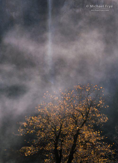 Oak, mist, and Bridalveil Fall, Yosemite NP, CA, USA